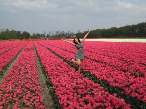 Tulip field in Lisse, Netherlands, 2014