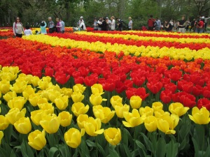 Tourists among the tulips at the Keukenhof, Netherlands, 2014