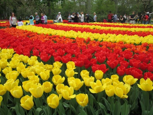 Tourists among the tulips at the Keukenhof, Netherlands, 2014
